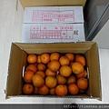 阿忠的橘子04.jpg