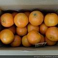 阿忠的橘子01.jpg