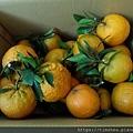 阿忠的橘子02.jpg