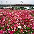 2004年 溪州花博會