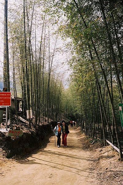 太極峽谷  竹林