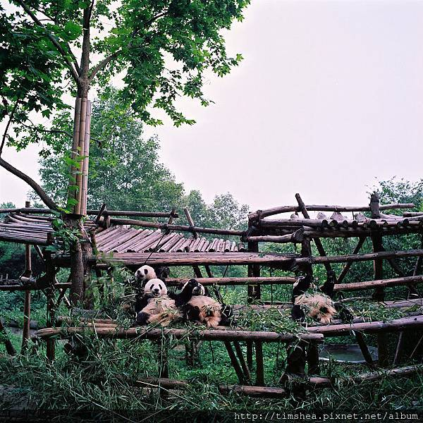 臥龍熊貓基地