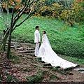 綠葉方舟  巧遇拍婚紗