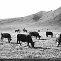 喀納斯湖區  草原