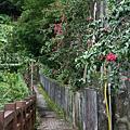 清泉部落  登山步道