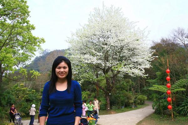 麗與鳥梨樹