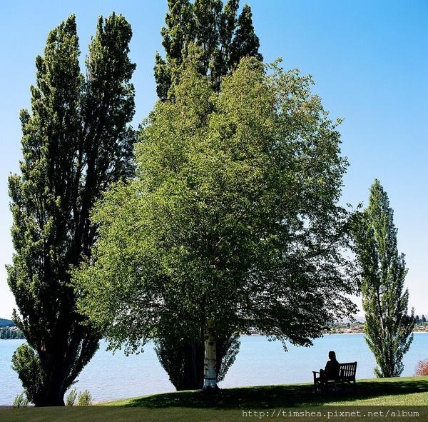 Wanaka 湖畔