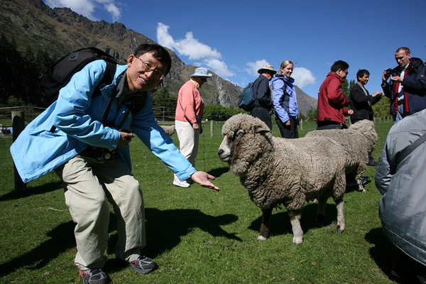 農莊  餵羊