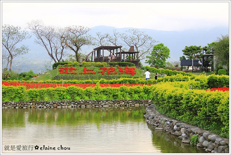 池上鄉農會四季花海22.jpg