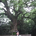 阿慢+神木