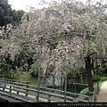 0420岡山、倉敷 (60).JPG
