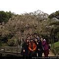 0420岡山、倉敷 (63).JPG