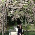 0420岡山、倉敷 (67).JPG