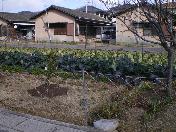 旁邊的菜園.JPG