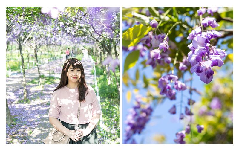 台北紫藤花季|淡水紫藤咖啡園
