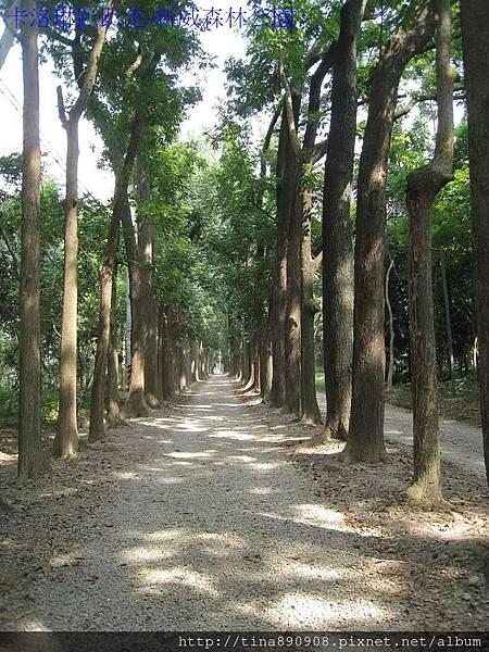 1021117-新威森林公園-C (9)