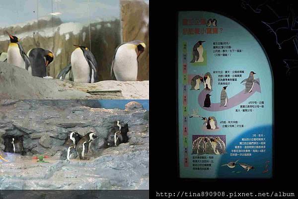 1051021-SS員旅-淡水線-DAY2-2-木柵動物園 (19)-企鵝1.jpg