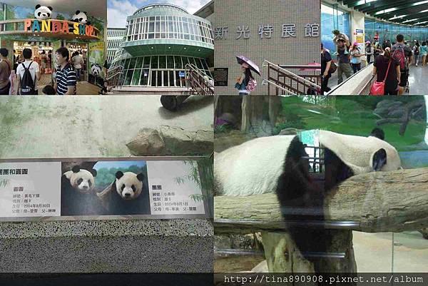 1051021-SS員旅-淡水線-DAY2-2-木柵動物園 (106)-貓熊.jpg