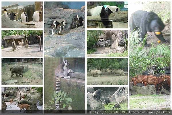 1051021-SS員旅-淡水線-DAY2-2-木柵動物園 (114)-動物.jpg