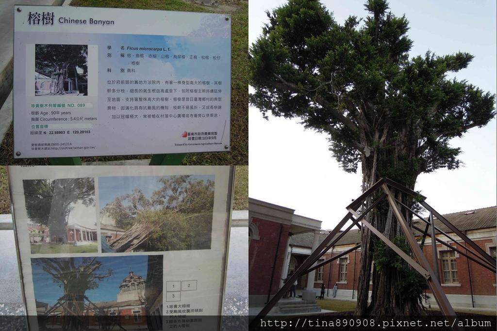 1061028-司法博物館-榕樹.jpg