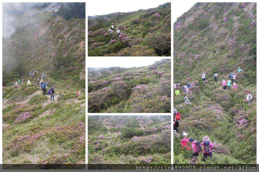 1060610-SS登山社-合歡北峰 (133)-1.jpg