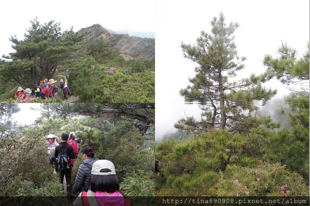 1060610-SS登山社-合歡北峰 (139)-1.jpg
