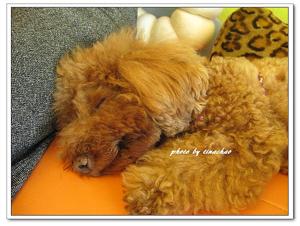 睡翻的小王子.jpg