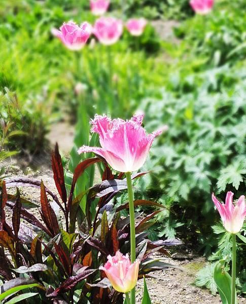 風之庭園.jpg