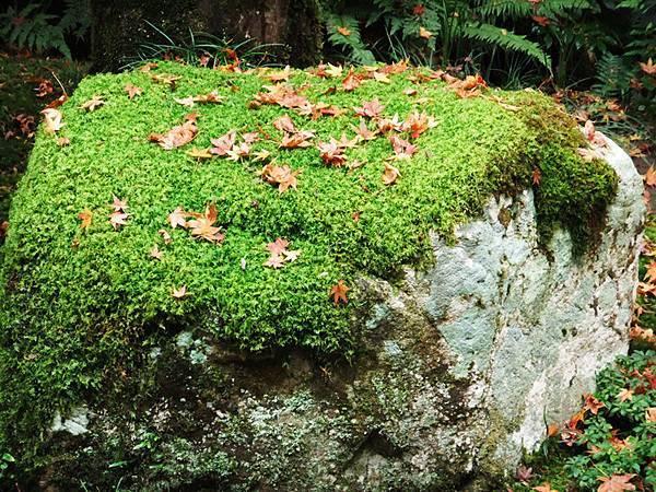 18園藝感的石頭.jpg