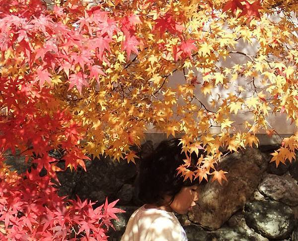 楓紅下的小女孩.jpg