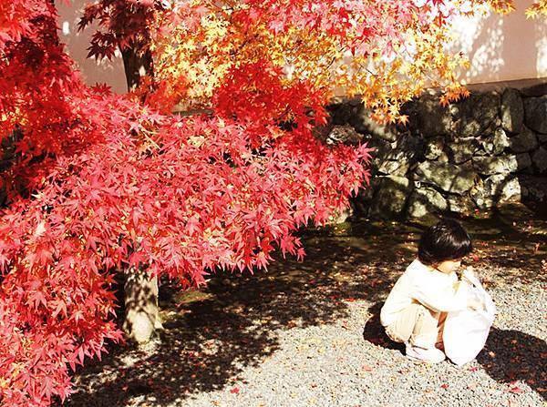 楓紅女孩2.jpg