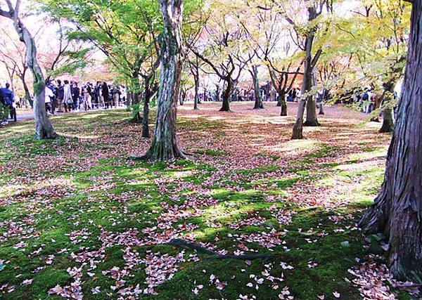 22紅葉落在草地上.jpg
