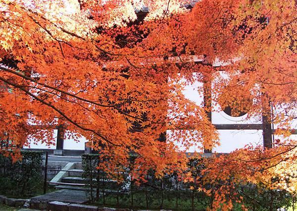 27日本寺院與紅葉真的超搭的.jpg