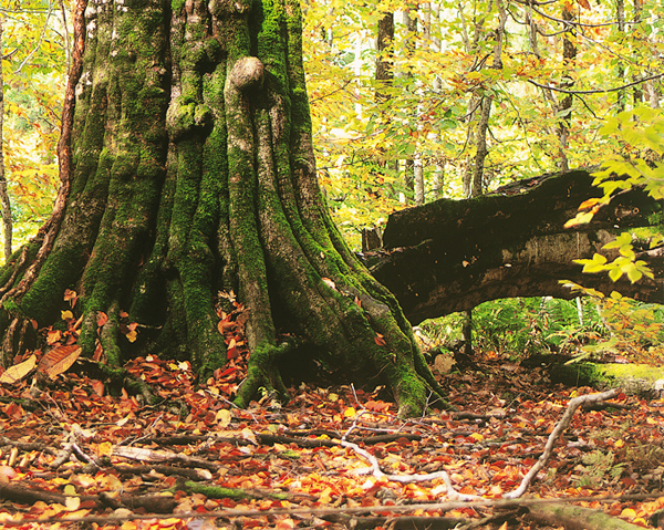 美麗的樹根.jpg