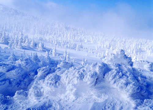樹冰奇景.jpg