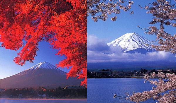 河口湖的春櫻秋楓.jpg