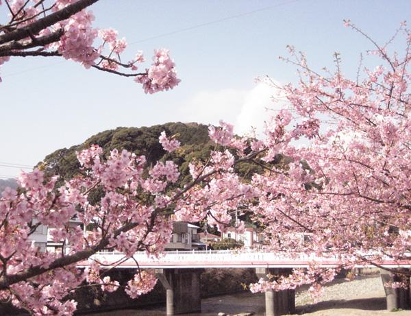 河津川畔.jpg