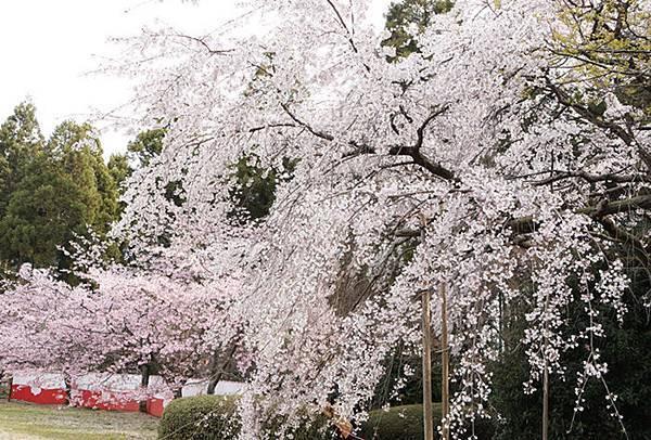 醍醐寺三寶院-7.JPG