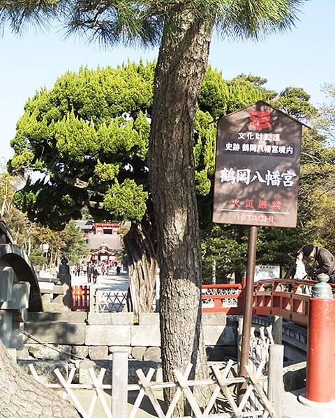 八幡宮1_鎌倉的鶴岡八幡宮