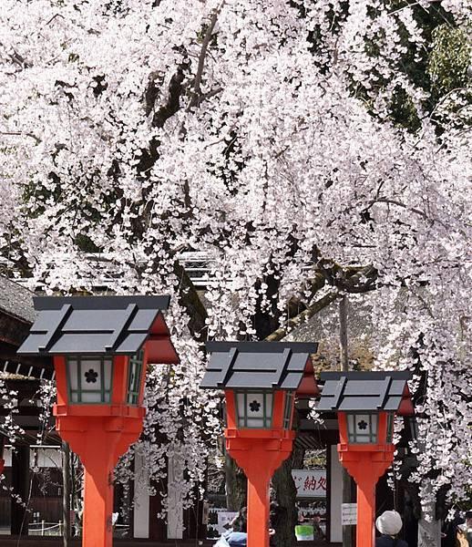 平野神社-2010