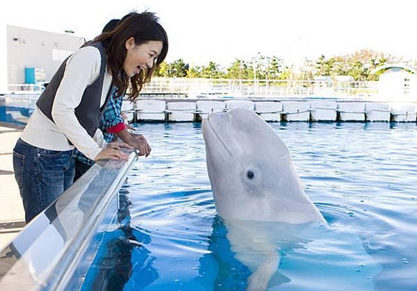 シロイルカ3白海豚