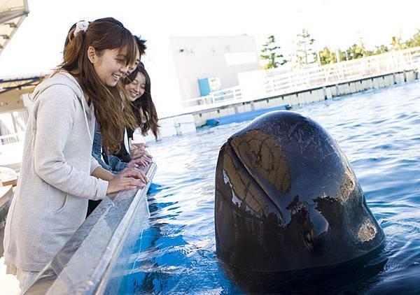 コビレゴンドウ1短鰭領航鯨