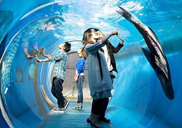 偶像劇的約會就是這種fuオタリア・チューブ水槽