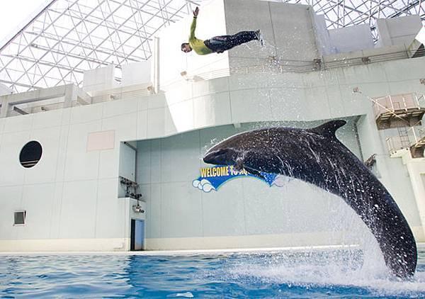 オキゴンドウジャンプ虎鯨
