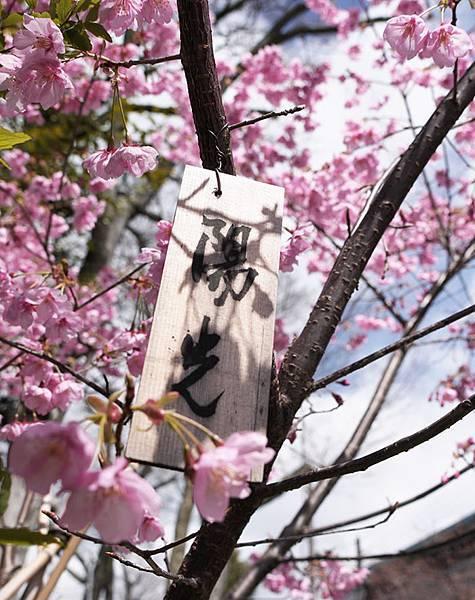 平野神社-陽光-4