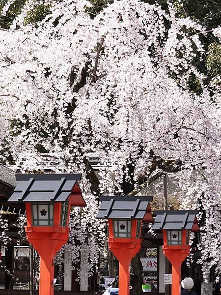 平野神社-2010-5