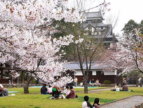 桜1 Cherry Blossoms 1松江出雲國際觀光推進協議會