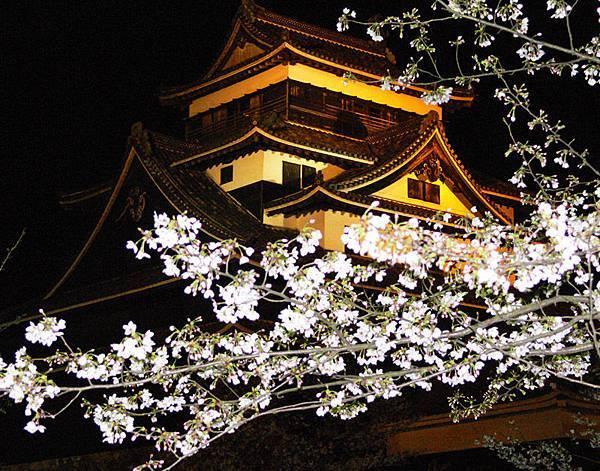 桜2 Cherry Blossoms 2松江出雲國際觀光推進協議會
