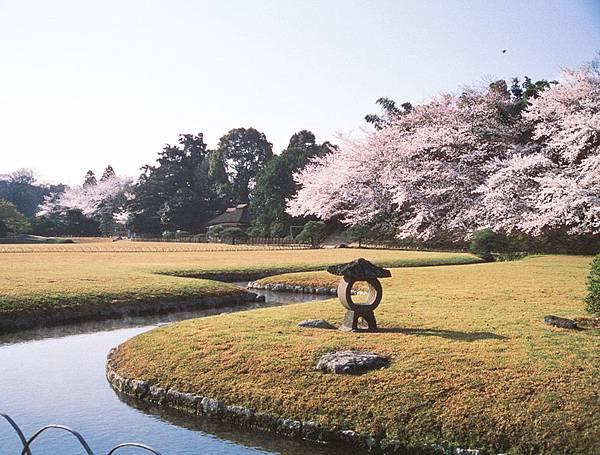 後楽園_桜