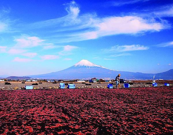 晒乾櫻花小蝦和富士山